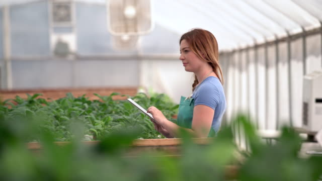 ms young woman using a digital tablet in a hydroponic farm - botany stock videos & royalty-free footage