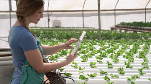 WS Young woman using a digital tablet on a hydroponic farm
