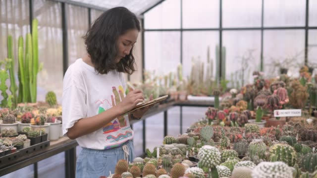 young woman using digital tablet while checking the cactus potted plant - examining stock videos & royalty-free footage