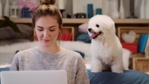 ung kvinna som använder sin bärbara dator medan hennes hund vilar bakom henne - tamdjur bildbanksvideor och videomaterial från bakom kulisserna