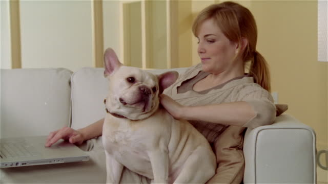 ms, cu, young woman using laptop, petting french bulldog - short sleeved stock videos & royalty-free footage