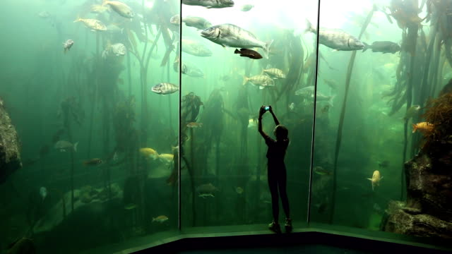 young woman using smart phone to film fish in the kelp forest exhibit - pre adolescent child stock videos & royalty-free footage