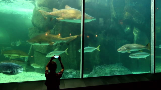 Young woman using smart phone to film sharks and fish in predator exhibit