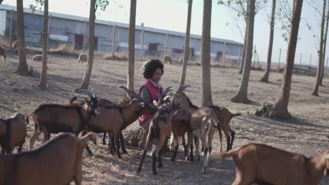 農場でヤギに餌を与える若い女性ボランティア - シェーブルチーズ点の映像素材/bロール
