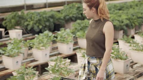 vidéos et rushes de young woman walking among plants in greenhouse - culture hydroponique