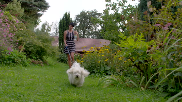 ws young woman walking her dog - lawn stock videos & royalty-free footage
