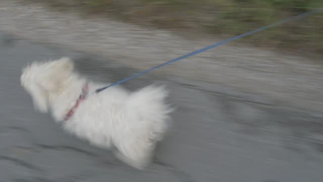 WS Jovem mulher andar seu cão