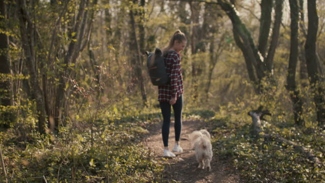 young woman walking in forest with dog - pet owner stock videos & royalty-free footage