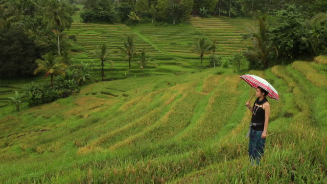 WS Young woman walking on terraced field in rain / Bali, Indonesia