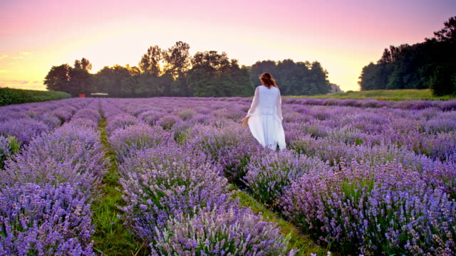 ds young woman walking through field of lavender - lavender stock videos & royalty-free footage