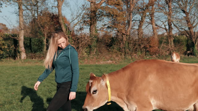 young woman walking with cow on dairy farm - small group of animals stock videos & royalty-free footage