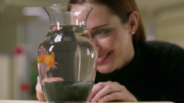 CU SELECTIVE FOCUS Young woman watching gold fish swimming in vase, Appleton, Wisconsin, USA