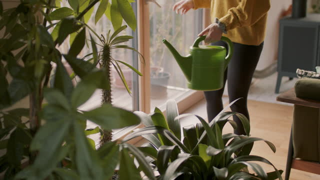 young woman watering house plants - young women stock-videos und b-roll-filmmaterial