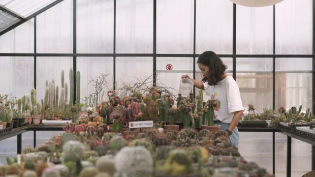vídeos de stock e filmes b-roll de young woman watering the cactus potted plant - cato