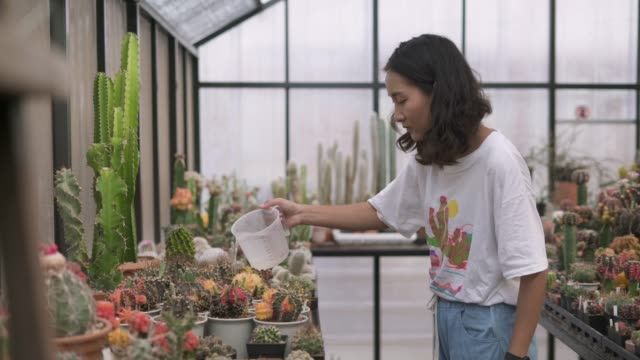 young woman watering the cactus potted plant - succulent plant stock videos & royalty-free footage