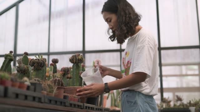 junge frau bewässert die kaktustopfpflanze - kaktus stock-videos und b-roll-filmmaterial