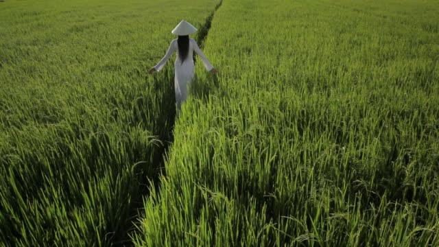WS HA LD Young Woman Wearing Ao Dai Walking Across Rice Paddy / Hoi An, Vietnam