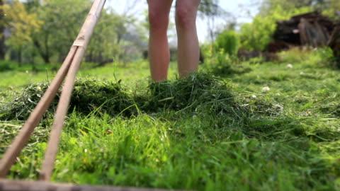 vídeos y material grabado en eventos de stock de young woman wearing red bombas cavando flor o vegetal cama - hierba familia de la hierba