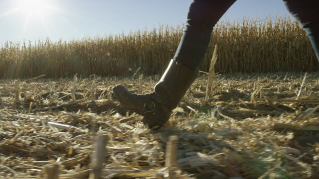 young woman with boots walks through a corn field at harvest under a clear, blue sky - farmer stock videos & royalty-free footage