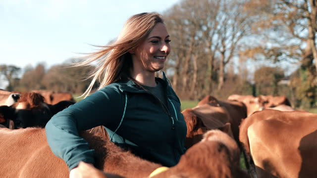 young woman with cows standing on dairy farm - hooved animal stock videos & royalty-free footage
