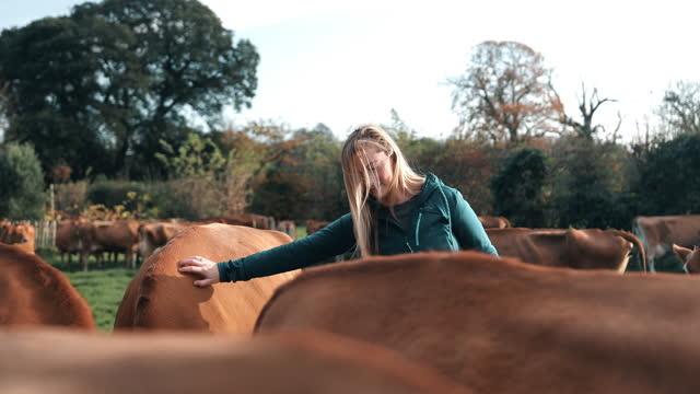young woman with cows standing on dairy farm - tierisches verhalten stock-videos und b-roll-filmmaterial