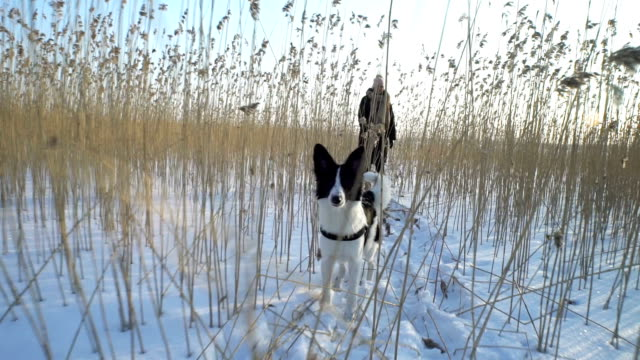 Young woman with dog walking among the reeds on the beach of the frozen sea, lake