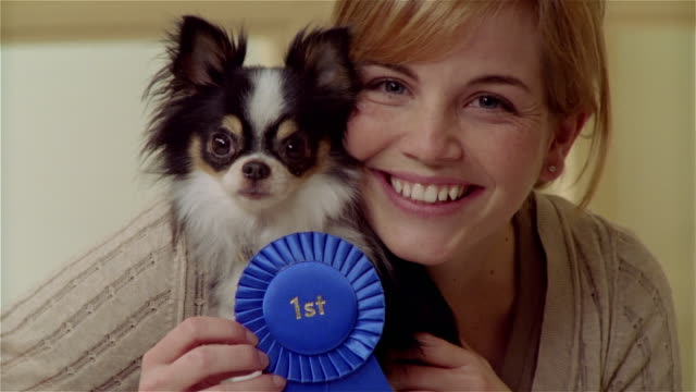 cu, young woman with long coat chihuahua wearing rosette, portrait - award ribbon stock videos & royalty-free footage