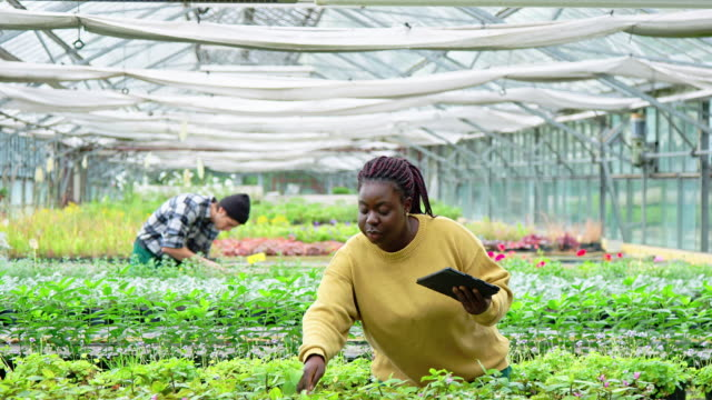 young woman working at plant nursery - coworker stock videos & royalty-free footage