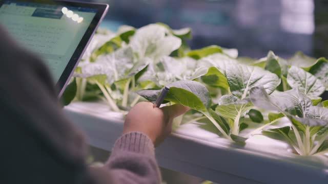 vidéos et rushes de la jeune femme travaillant vérifient le légume organique - culture hydroponique