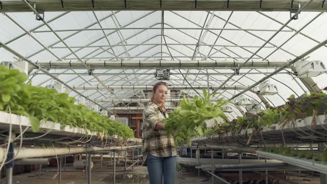 young woman working in a greenhouse on farm - 水栽培点の映像素材/bロール