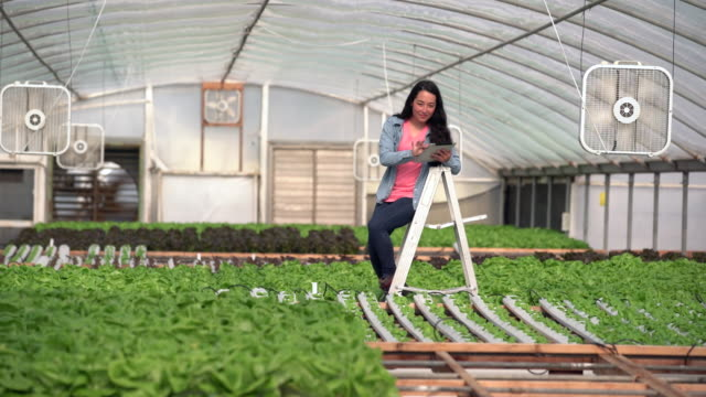 ws young woman working in a hydroponic farm - portability stock videos & royalty-free footage