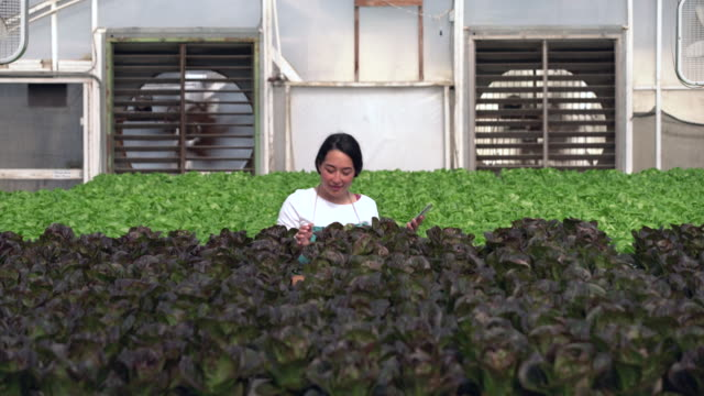 WS Young woman working in a hydroponic farm