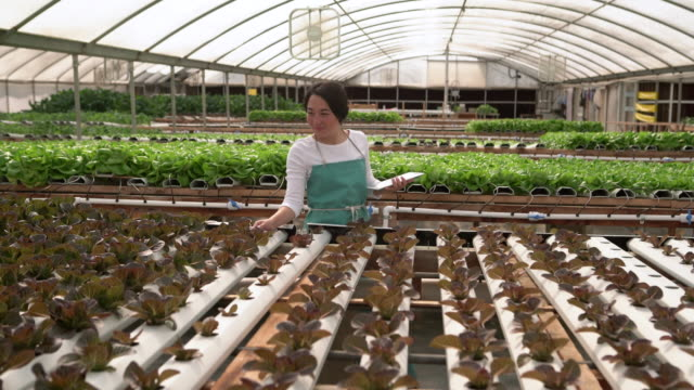 vídeos de stock, filmes e b-roll de ws young woman working in a hydroponic farm - biotechnology