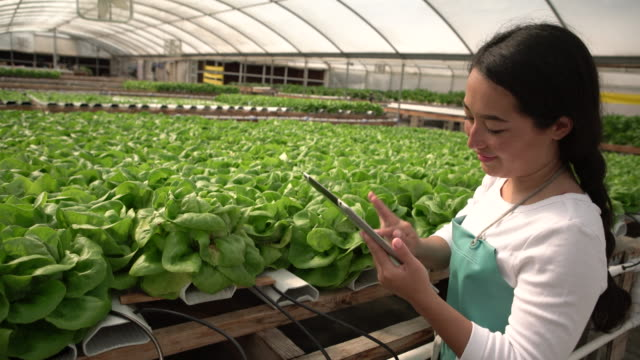 MS young woman working in a hydroponic farm