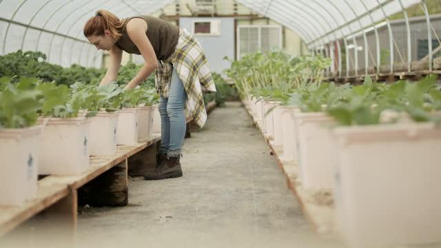 vídeos y material grabado en eventos de stock de young woman working in greenhouse - hidropónica