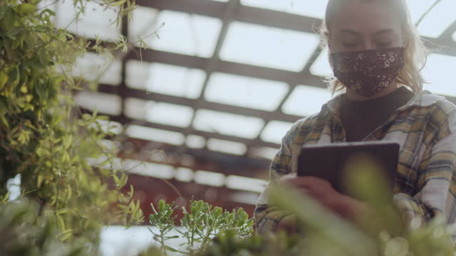 young woman working in greenhouse with digital tablet - new business stock videos & royalty-free footage