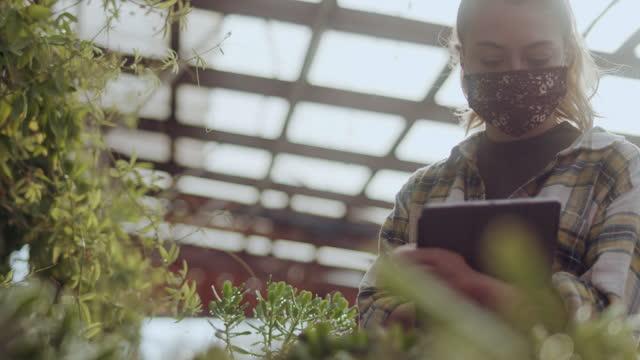 vídeos y material grabado en eventos de stock de young woman working in greenhouse with digital tablet - hidropónica
