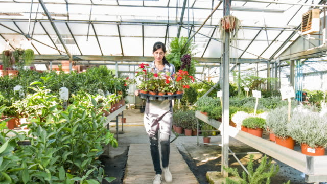 young woman working in plant nursery - garden center stock videos and b-roll footage