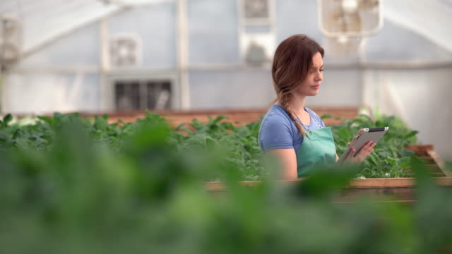 ms young woman working on a digital tablet in a greenhouse - agriculture stock videos & royalty-free footage
