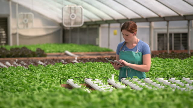 WS Young woman working on digital tablet in a hydroponic farm