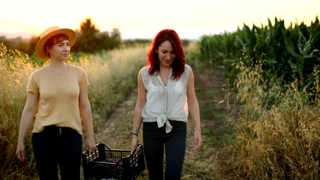 young women carrying crate with harvested cherries together - orchard stock videos & royalty-free footage