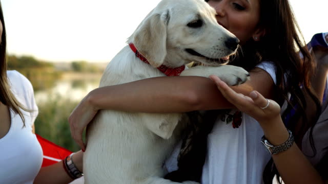young women cuddling her dog - patriotism stock videos & royalty-free footage
