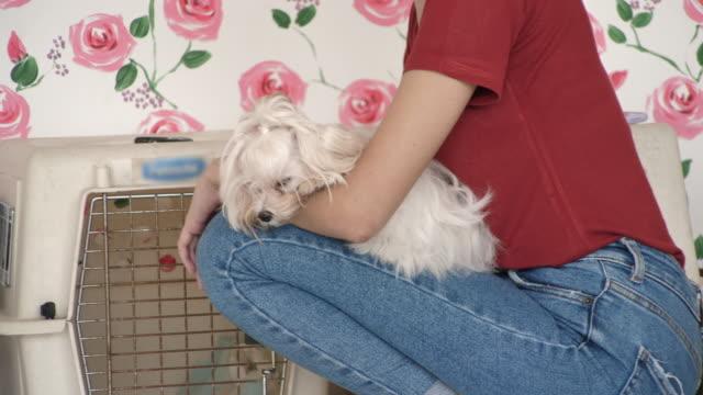 自宅で彼女の犬と楽しんで若い女性 - 突き出た鼻点の映像素材/bロール