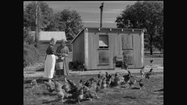 stockvideo's en b-roll-footage met ms young women feeding hens in farm / united states - zwart wit