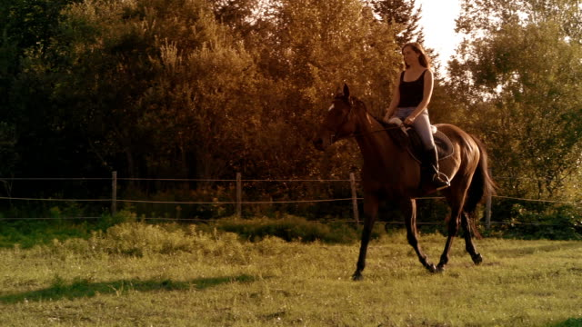 young women horse sunlight farm paddock slow motion - recreational horse riding stock videos & royalty-free footage