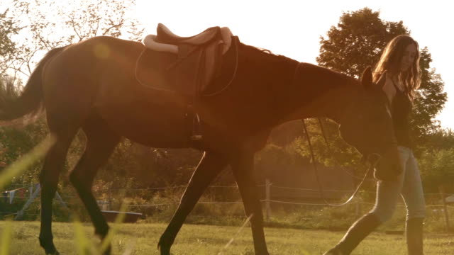 young women horse sunlight farm paddock slow motion - horse stock videos and b-roll footage