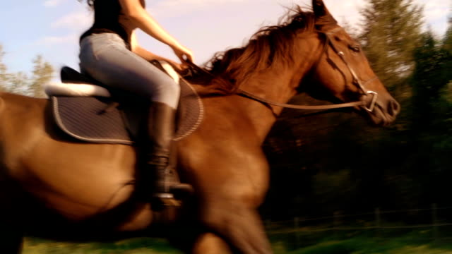 young women horse sunlight farm paddock slow motion - all horse riding stock videos & royalty-free footage