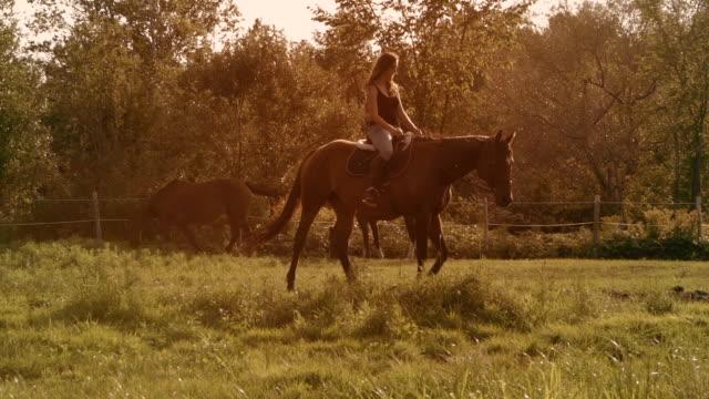 若い女性馬日光ファーム パドック スローモーション - 騎士点の映像素材/bロール