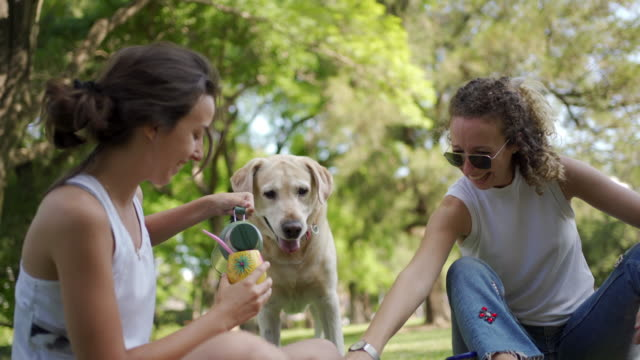 young women playing with dog in public park - pet owner stock videos & royalty-free footage