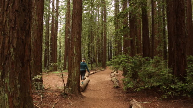 vídeos de stock, filmes e b-roll de a young women walking in the woods alone with tall redwood trees around her. - sequoia sempervirens
